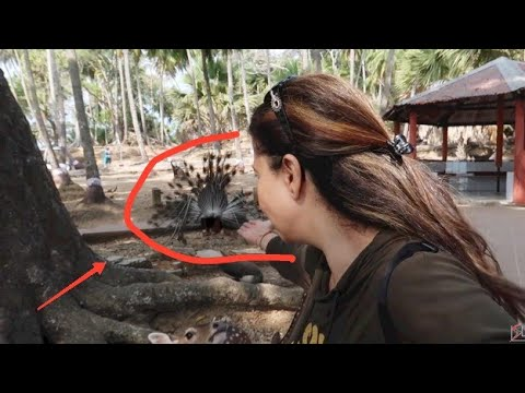 Jungle Me Mor Naacha Maine Dekha | Ep 2 | Andaman 2020 | Ss vlogs :-)