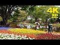 TOKYO.| チューリップ.| Tulip gardens at Showa Memorial Park 2018. #4K #昭和記念公園