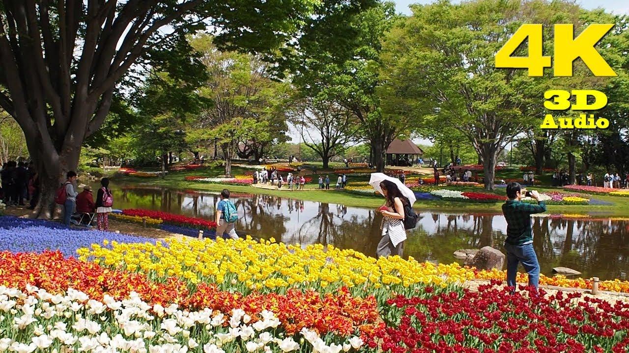 Tulip Gardens At Showa Memorial Park 2018. [ 4K ]
