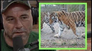 Joe Rogan | People in Texas Are Keeping Tigers as Pets