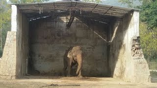 This Elephant Spent 30 Years Neglected By A Zoo – Until Activists Stepped Up To Set Him Free