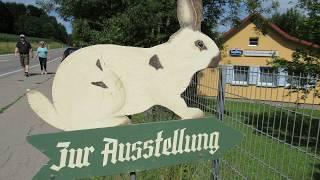 Sommerfest 2017 Hasenhaus Schwenningen a.N.
