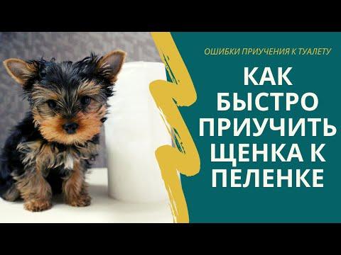Вопрос: Как приучить щенка к туалету в квартире?