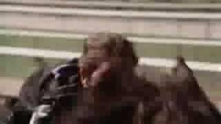 The Black Stallion Race
