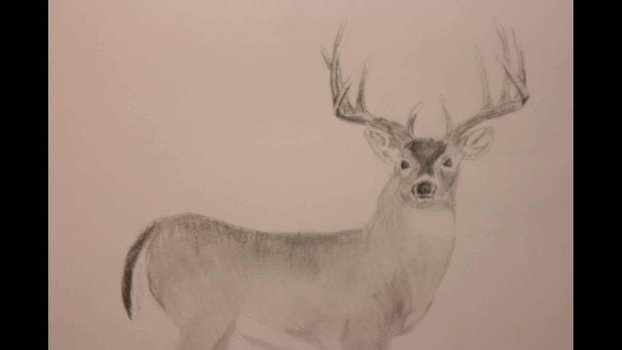 how to draw a whitetail deer 3 the easy way youtube