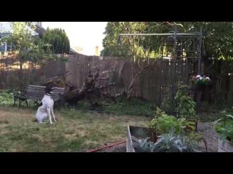 This Dog Got Hops!