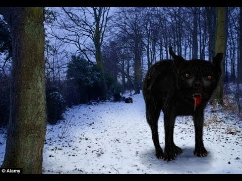 Is this the skeleton of legendary devil dog Black Shuck