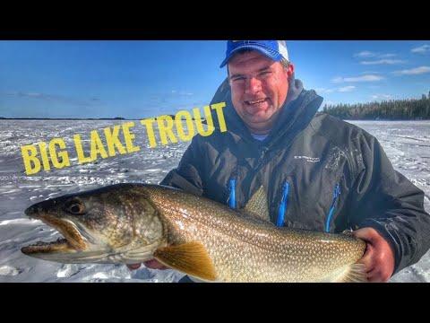 Ice Fishing Massive LAKE TROUT In Northern Manitoba - Massive 40 Inch Laker