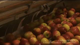 100  Apples Journey