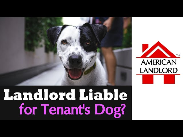 Landlord Liability for Tenant's Dog | American Landlord