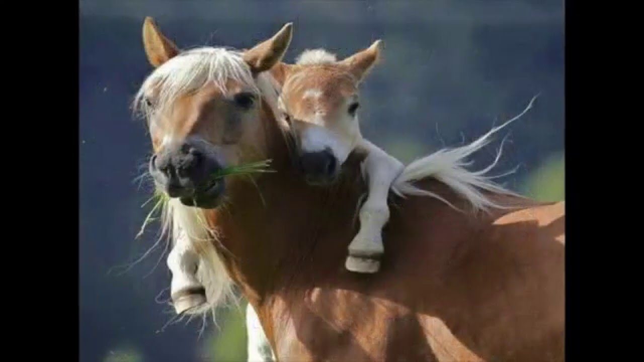 """my love for horses """"sean reaches between us and slides a thin bracelet of red ribbons over my free  tags: believing, bull-rider, cf, grief, horses, karen, kingsbury, love, romance,."""