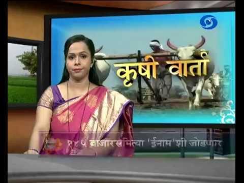 Krishivarta Bajarbhav - 21 June 2018 - कृषीवार्ता बाजारभाव