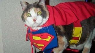 Самое смешное видео про кошек прикол:) (смотреть)