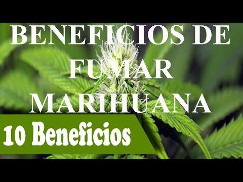 Beneficios de fumar Marihuana   Efectos positivos de la marihuana