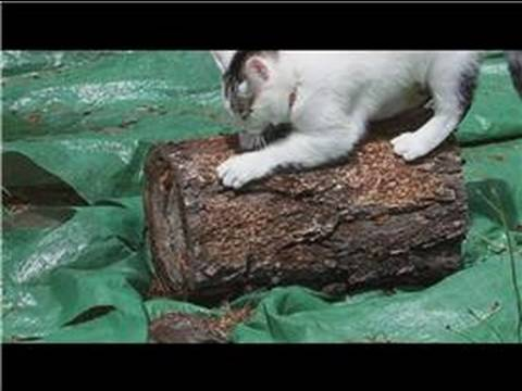 how to clean cat pee off mattress