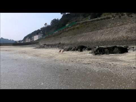Azawakh greyhound racing on the beach.Азавак, Azavak, سلوقي