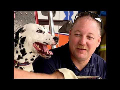 Sam the ThreeLegged Fire House Dog (Texas Country Reporter)