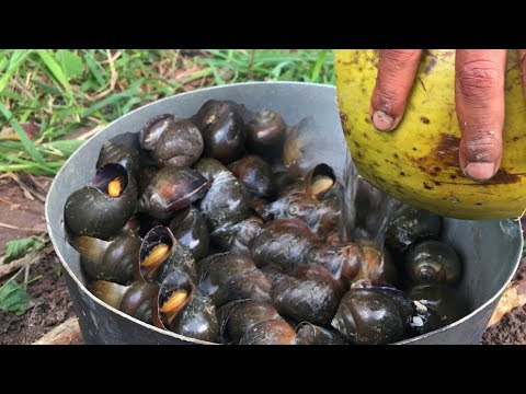 Snail Recipe - A little girl and boy boil snails with coconut - Amazing Coconut Boiling Snails Foods