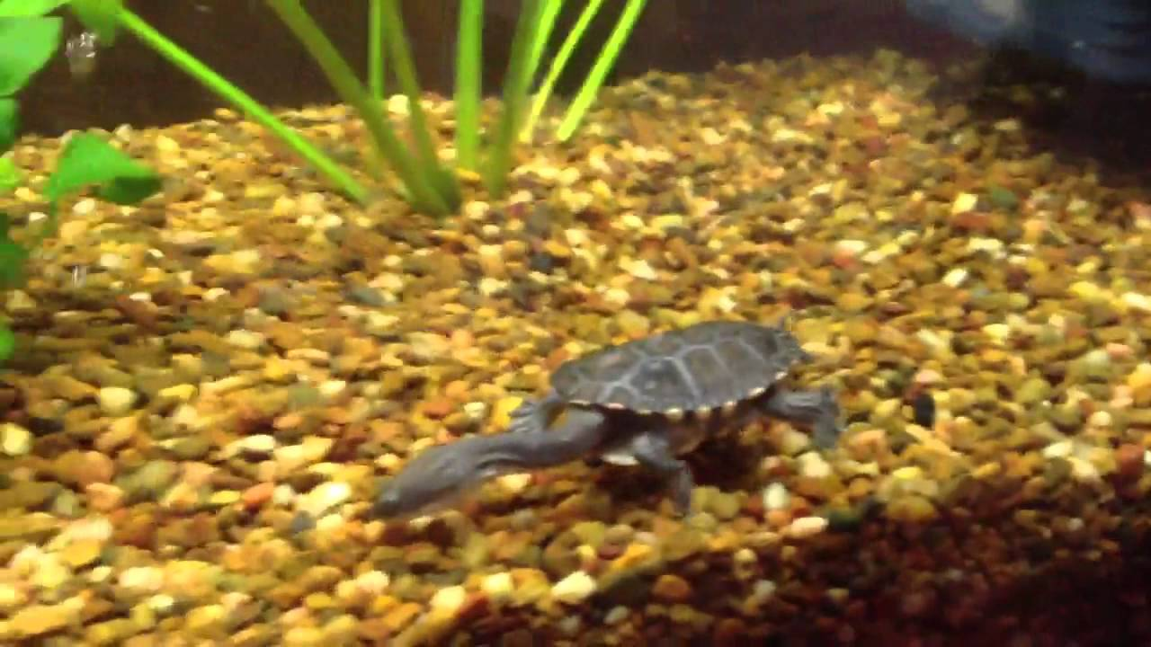 texas map turtle with Watch on I as well Cat Shaped Pools furthermore Contact also Fs025 02 additionally Photo Gallery.