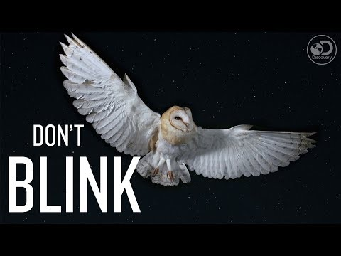Dreams of Flying   Don't Blink