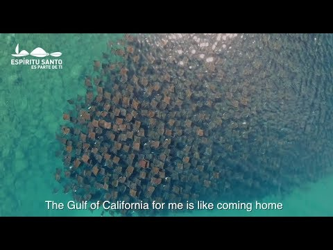 Hope for the Preservation of the Gulf of California
