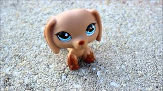 Meet My New Lps #518 Opal The Caramel Brown Dachshund - Lpsfunblog.com