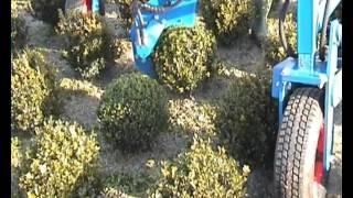 видео Спираль и шар - формы природы