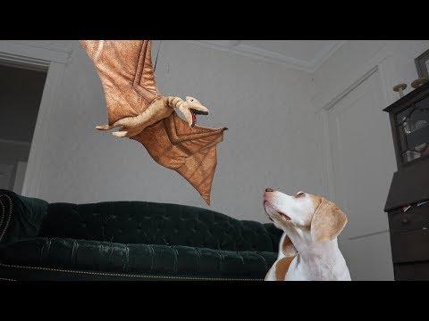 Dog vs Flying Dino/Dragon: Game of Thrones Edition Maymo