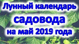 Лунный календарь садовода на май 2019 года. Когда обрезать и прививать деревья в мае 2019 в саду.