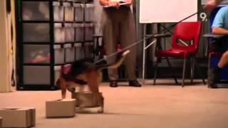 Quarantine Detector Dogs
