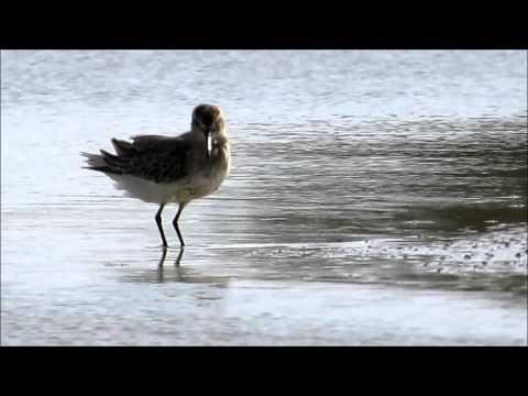 Wildlife in Qatar