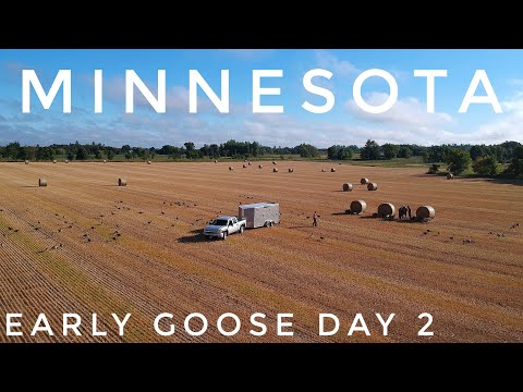 Early Goose Season Central Minnesota | Day 2