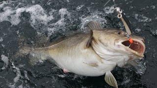 Фьордовая рыбалка у Malangen Brygger.