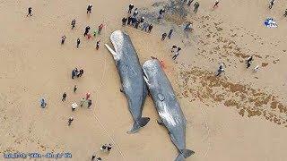 حقائق عن الحوت   الكائن العملاق الوحيد الحزين الذى لا يفهمه البشر !