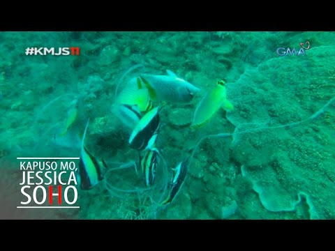 Kapuso Mo, Jessica Soho: The ornamental fishing in the Philippines