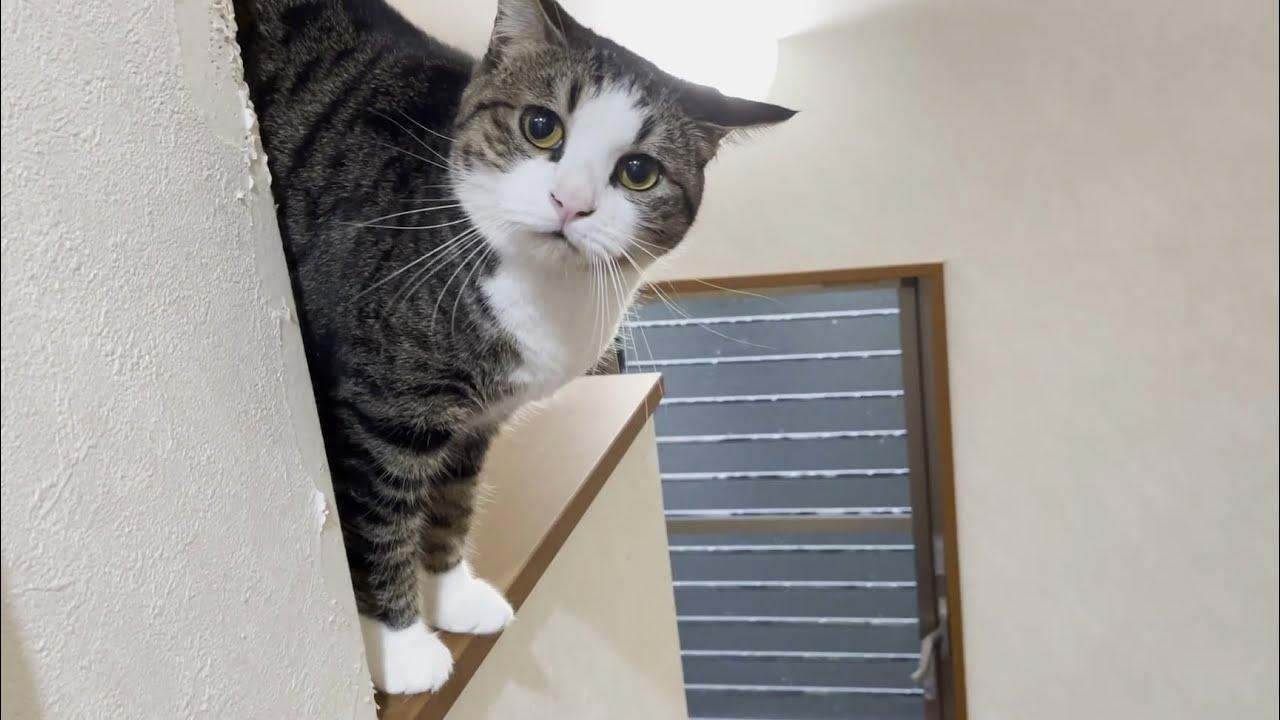 寂しくなると「ニャーニャー」連呼してしまう猫