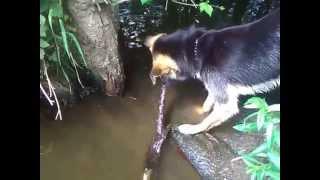 Talking water dog
