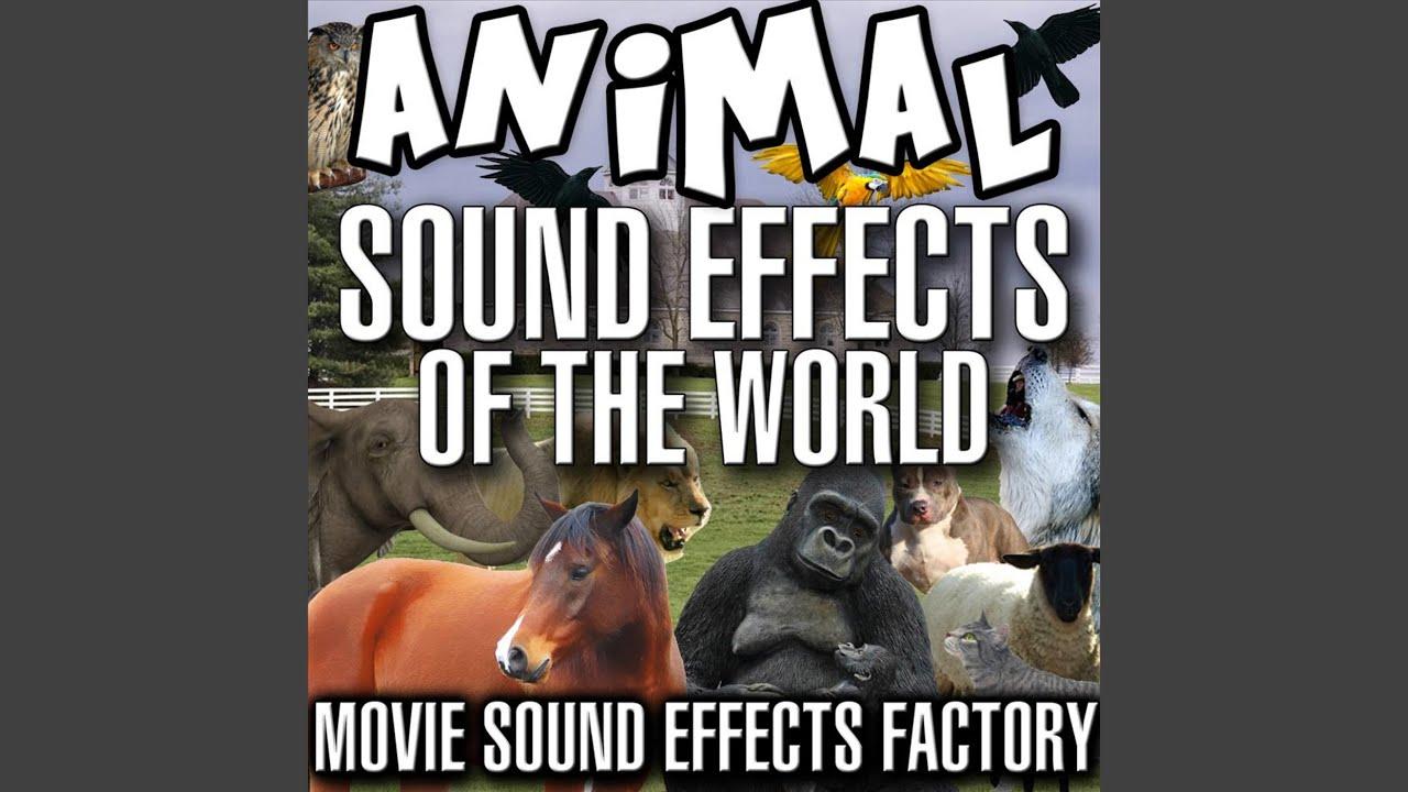 Dinosaurs Sounds