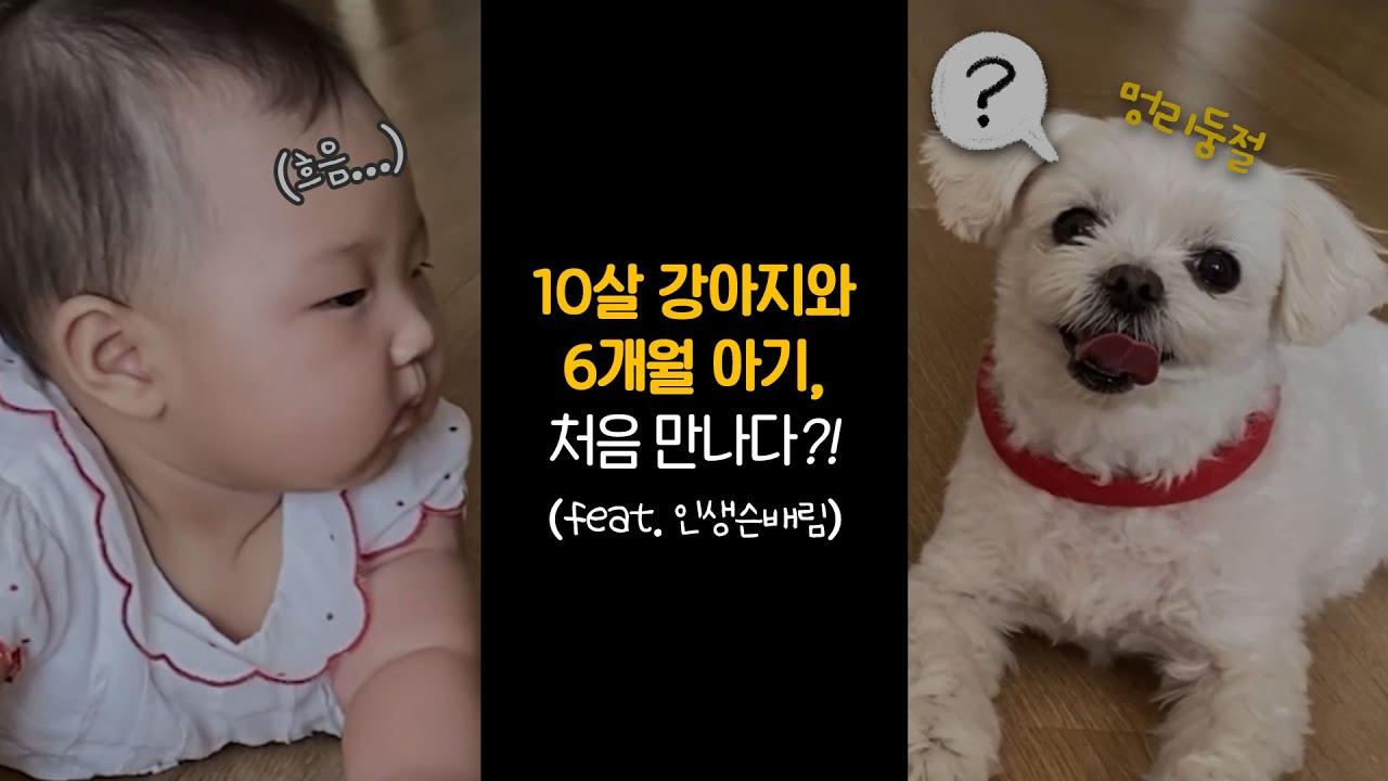 #Shorts 6개월 아기 VS 10살 강아지🔥 서후가 인생 선배님을 만났어요🤣 | 최희 브이로그 mini