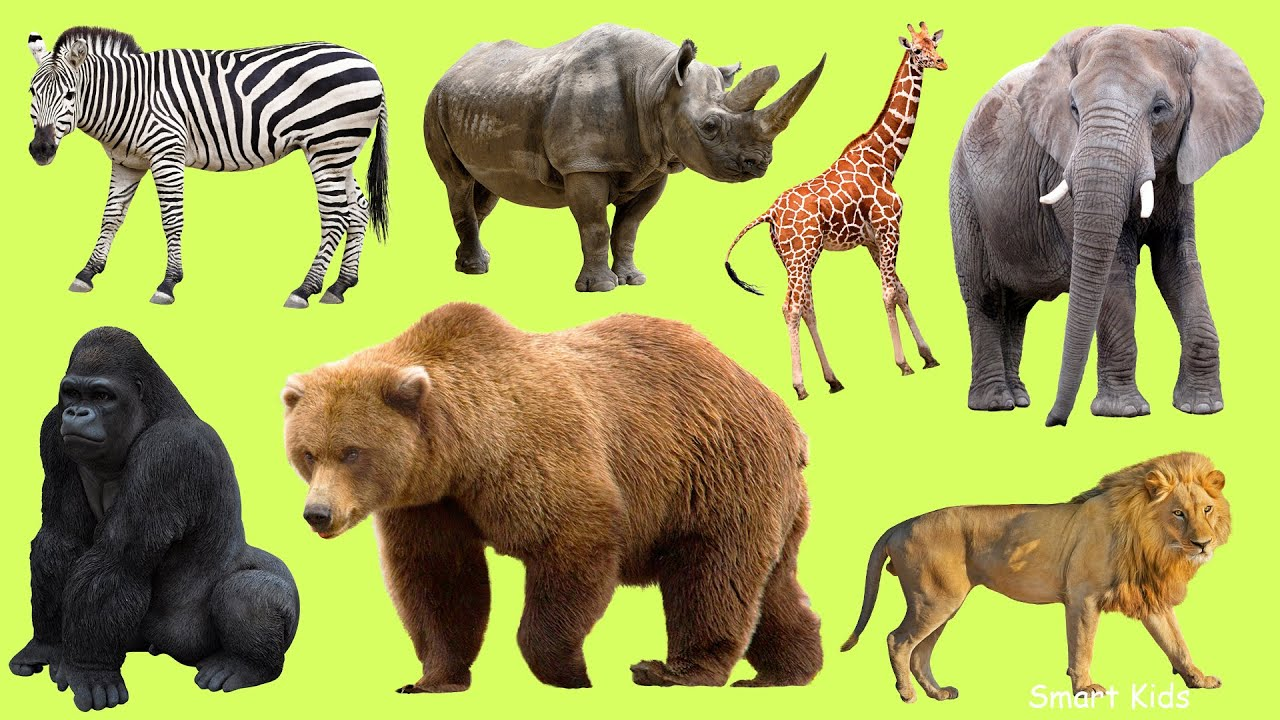 Learn names Zoo Animals in English  | Learn Sounds of Zoo Animals for Kids
