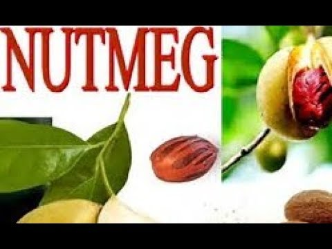 nutmeg-soothes-stomach-and-promotes-sleep---if-taken-correctly---ancient-spice-loaded-with-benefits