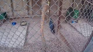 Птичка ходит из стороны в сторону вдоль ограждения   в клетке зоопарка