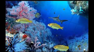 Best Screensaver - Digi Fish Aqua Real 2 HD