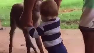 Как люди любит животных  и Животные любят людей