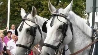 Лошади на параде!