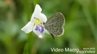 Video Kumbang dan Kupu- Kupu download MP3, 3GP, MP4, WEBM, AVI, FLV Oktober 2019