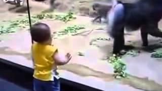 Младенец в зоопарке встретил смешную обезьяну прикол онлайн