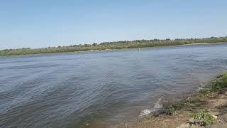 Нижняя Волга р Ахтуба р Даниловка Рыбалка на донки с берега