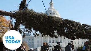 The Capitol Christmas Tree arrives in Washington, D.C. | USA TODAY