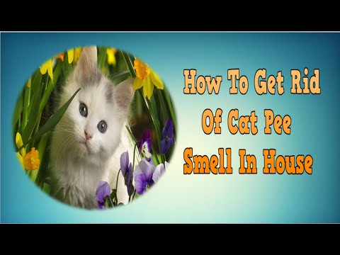 how to get rid of cat pee smell in house get rid of cat urine smell cat smell cat odor youtube. Black Bedroom Furniture Sets. Home Design Ideas